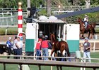 Metaboss Retired After Injury on Turf Course