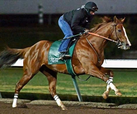 California Chrome - Horse
