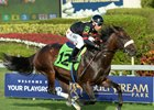 Half Brother to Royal Delta Tests Turf Prowess