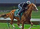 California Chrome Logs Work for 'Challenge'