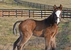 First Foal by Palace Malice Born