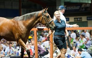 Magic Millions Gold Coast Sale Concludes With Records