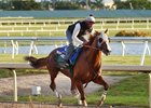 California Chrome Focused in Penultimate Move
