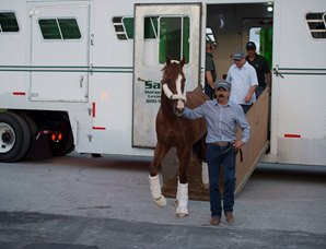 California Chrome Arrives at Gulfstream Park