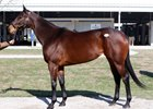 Vibrant Market in Fasig-Tipton Winter Mixed Sale Opener