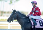 McCraken Top Individual in Kentucky Derby Future Wager