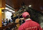 Cinnamon Spice Tops Positive Fasig-Tipton Auction