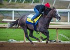 Arrogate Headed to Dubai World Cup