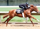 Tapit Colt Tops Barretts Hips to Watch