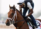 Dubai World Cup: Horses Training, March 22, 2017 Part 3