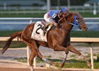 McCraken, Gunnevera Top Kentucky Derby Future Wager