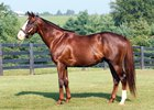 Grade 1 Winner Giant Oak Dead at Age 11