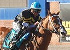 Hence Springs Upset in Sunland Derby