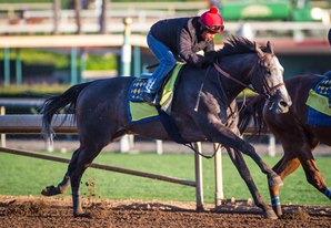 Arrogate Posts Last Work Before Shipping to Dubai