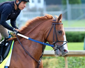 Hence Likely to Join Lookin at Lee in Preakness