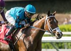 Stormy Liberal Wins Third Straight Stakes