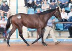 Medaglia d'Oro Colt Lights Up Easter Sale Bid Board