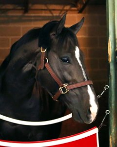 Midnight Storm Seeks Grade 1 Dirt Win in Gold Cup