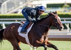 Paradise Woods Has Penultimate Oaks Move