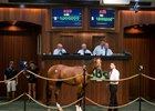 Union Rags Colt Goes for $1 Million at OBS