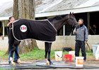 Sharp: Girvin Still on Track for Kentucky Derby