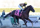 Irish War Cry Rebounds in Wood Memorial