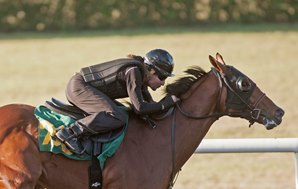 More Than Ready Filly, Tiznow Colt Flash Speed at OBS