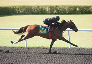 Malibu Moon Filly Fastest at OBS Under Tack Session