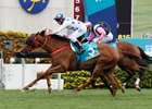 Hong Kong Races Marred by Tragedy