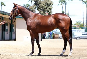 McCarthy's Juveniles Top Barretts May Sale