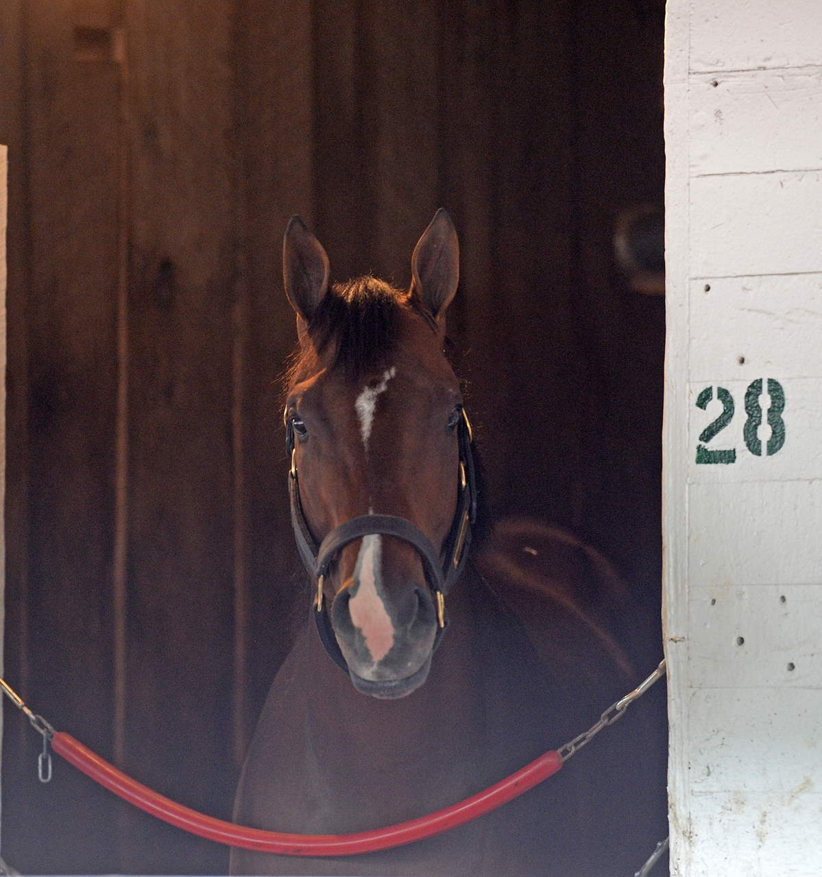 Always Dreaming wins Kentucky Derby, Villager's horse Girvin comes in 13th