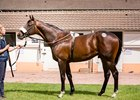 Street Sense Colt Major Pinhook Score at Arqana