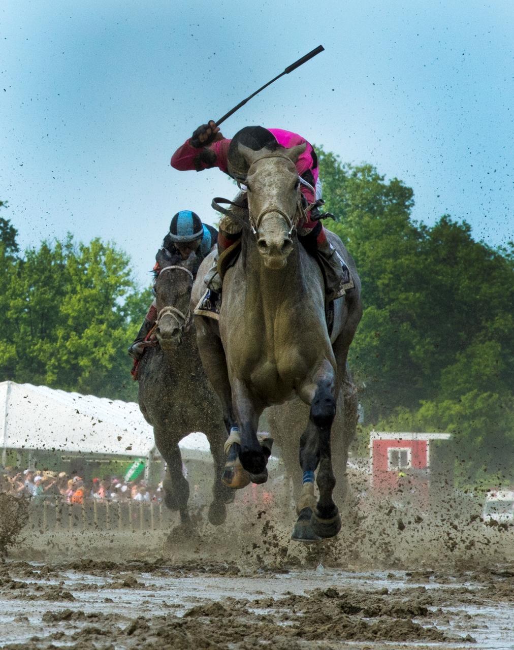 bloodhorse.com - Frank Angst - Humane Society, PETA Support USADA Bill