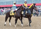 NTRA Poll Ranks Always Dreaming Top 3-Year-Old