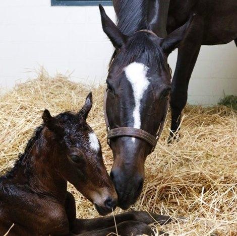 Zenyatta Gives Birth To Medaglia D Oro Filly Bloodhorse Com