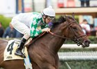 Undefeated Sircat Sally Cruises in Senorita