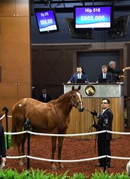 Ghostzapper Colt Acquired by Chu for $800,000