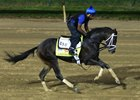 Pletcher to Keep Always Dreaming in Draw Reins