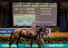 Record Day for Magic Millions Broodmare Sale