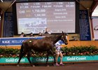 Magic Millions Broodmare Sale Sets Records