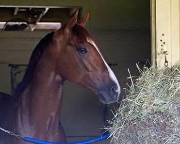 Senior Investment Horse Profile Bloodhorse