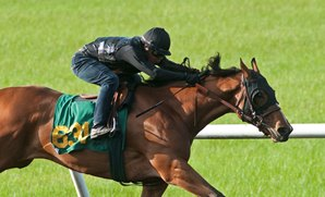 Two Fillies Fastest Workers in OBS Under Tack Finale