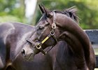 Maryland Horse of the Year Ben's Cat Dies