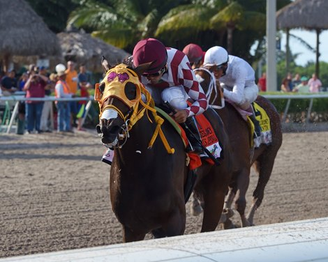 Curlin S Approval Makes Princess Rooney Rebound