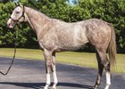 Winslow Homer Retired to Journeyman Stud