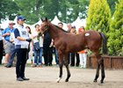 Offspring of Aptly Named Deep Impact Shine at Auction