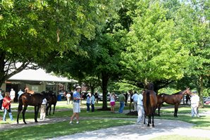 Hips to Watch: Fasig-Tipton July Yearling Sale