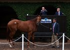 Animal Kingdom Colt Tops Barretts Paddock Sale