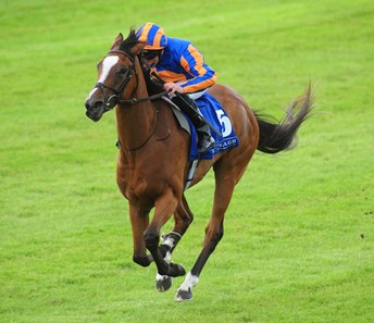 Actress Ire Horse Profile Bloodhorse