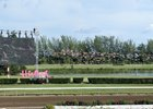Few Turn Out for Hialeah's Revised Quarter Horse Racing